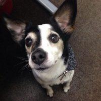 Archie-brewery-dog